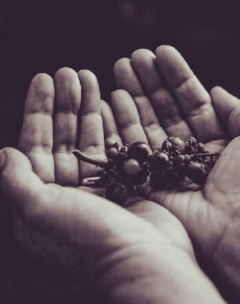 hands iboga ICEERS plant medicine ethnobotany