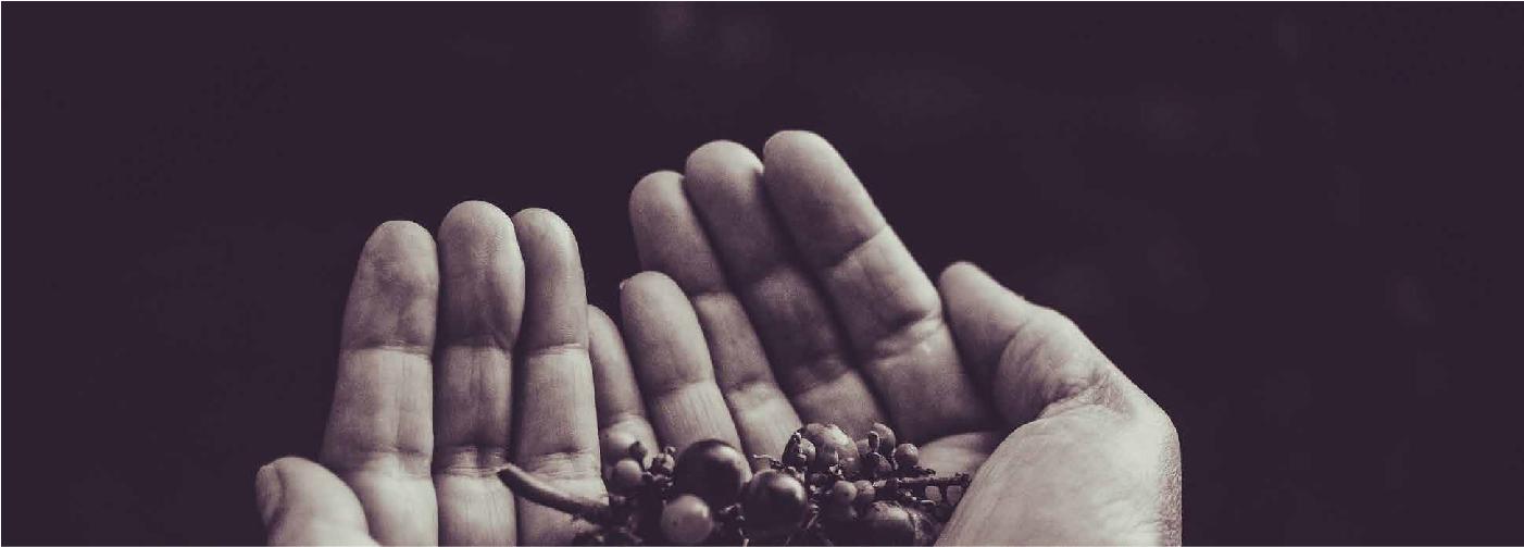 manos hands plants