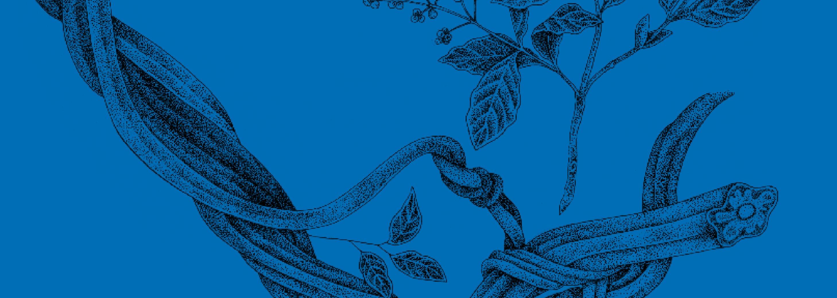 ICEERS PsychePlants plants psychoactive plantas psicoactivas