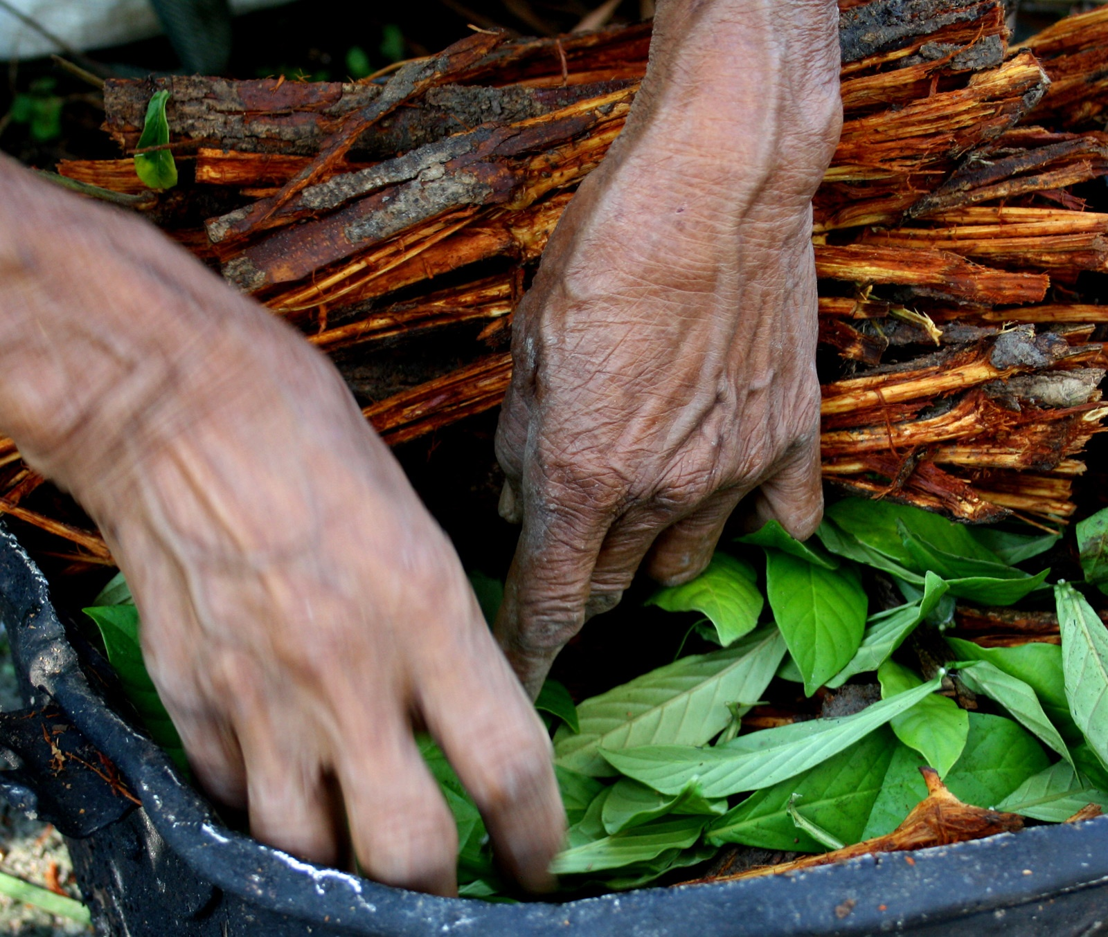 ayahuasca's legal status