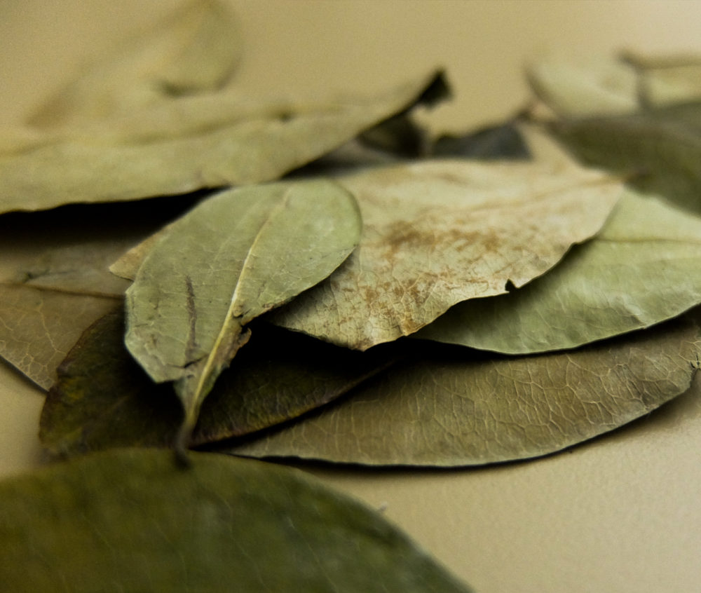 coca leaf hoja ICEERS