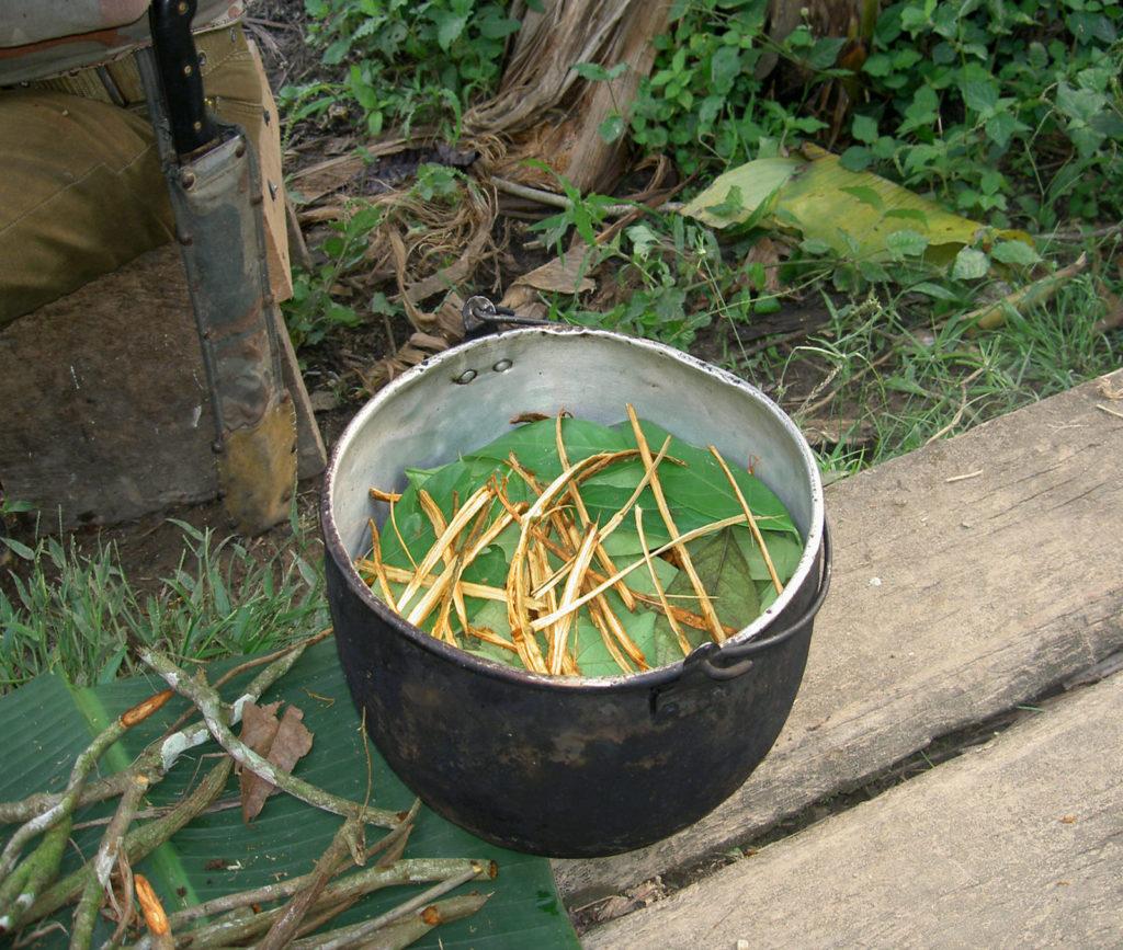 guía ayahuasca preparación cocina cooking ICEERS