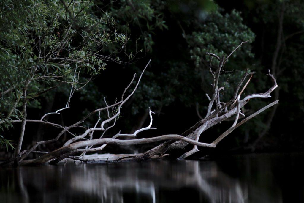 ayahuasca grief iowaska river death mourning ICEERS