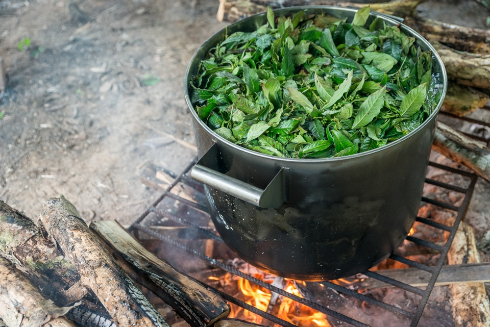ayahuasca research cooking jungle Amazon ICEERS