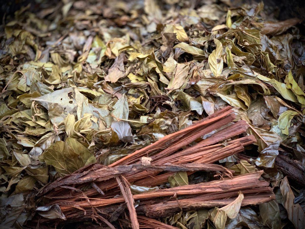 ayahuasca iowaska Peru COVID-19 ICEERS study