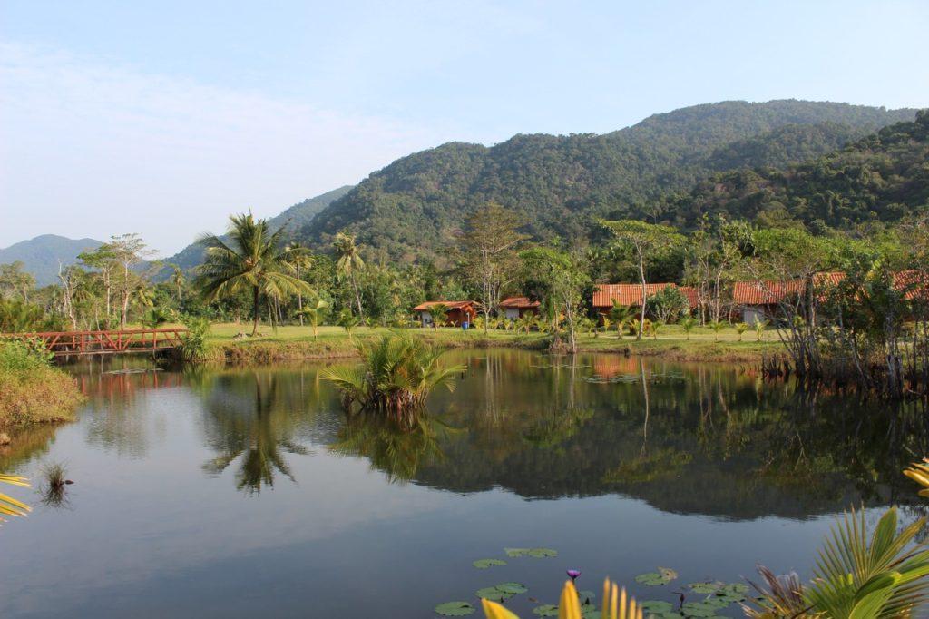 COVID-19 crisis pandemia Amazonas ICEERS ayahuasca iowaska