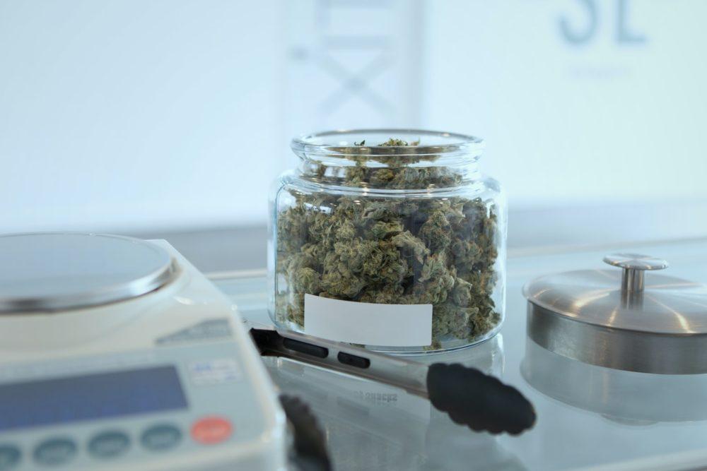 regulating cannabis social clubs regulación clubes sociales de cannabis CSCs