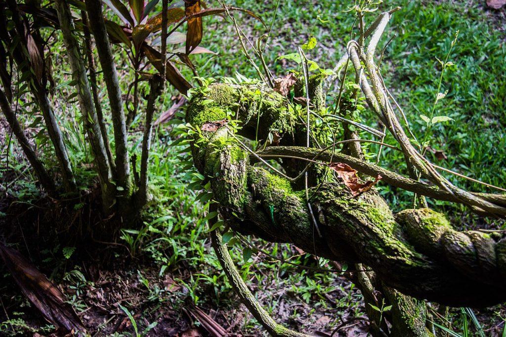global mental health ayahuasca iowaska vine ICEERS