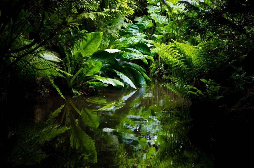 ayahuasca iowaska seguridad pandemia COVID-19 AmazonasICEERS