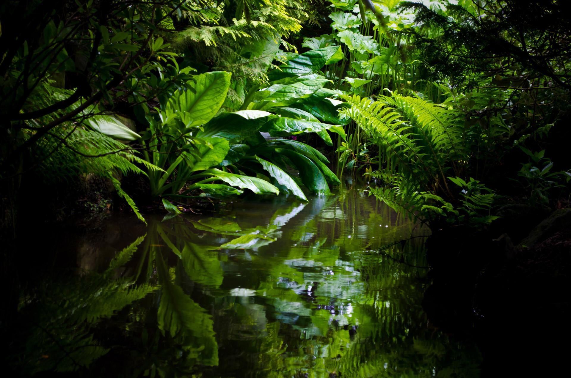 Amazon jungle pandemic ayahuasca ceremony safety