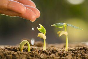 plantar ayahuasca