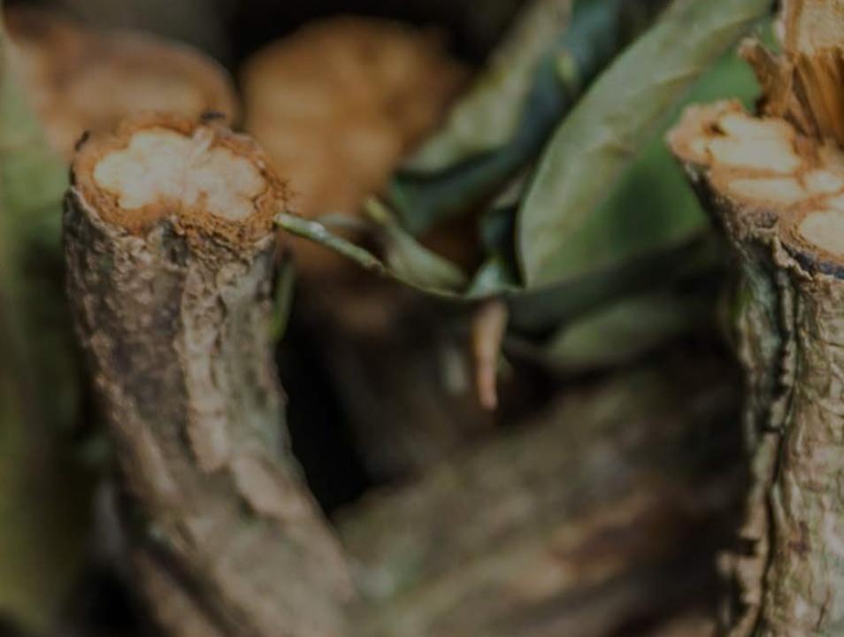 informe ayahuasca España salud pública
