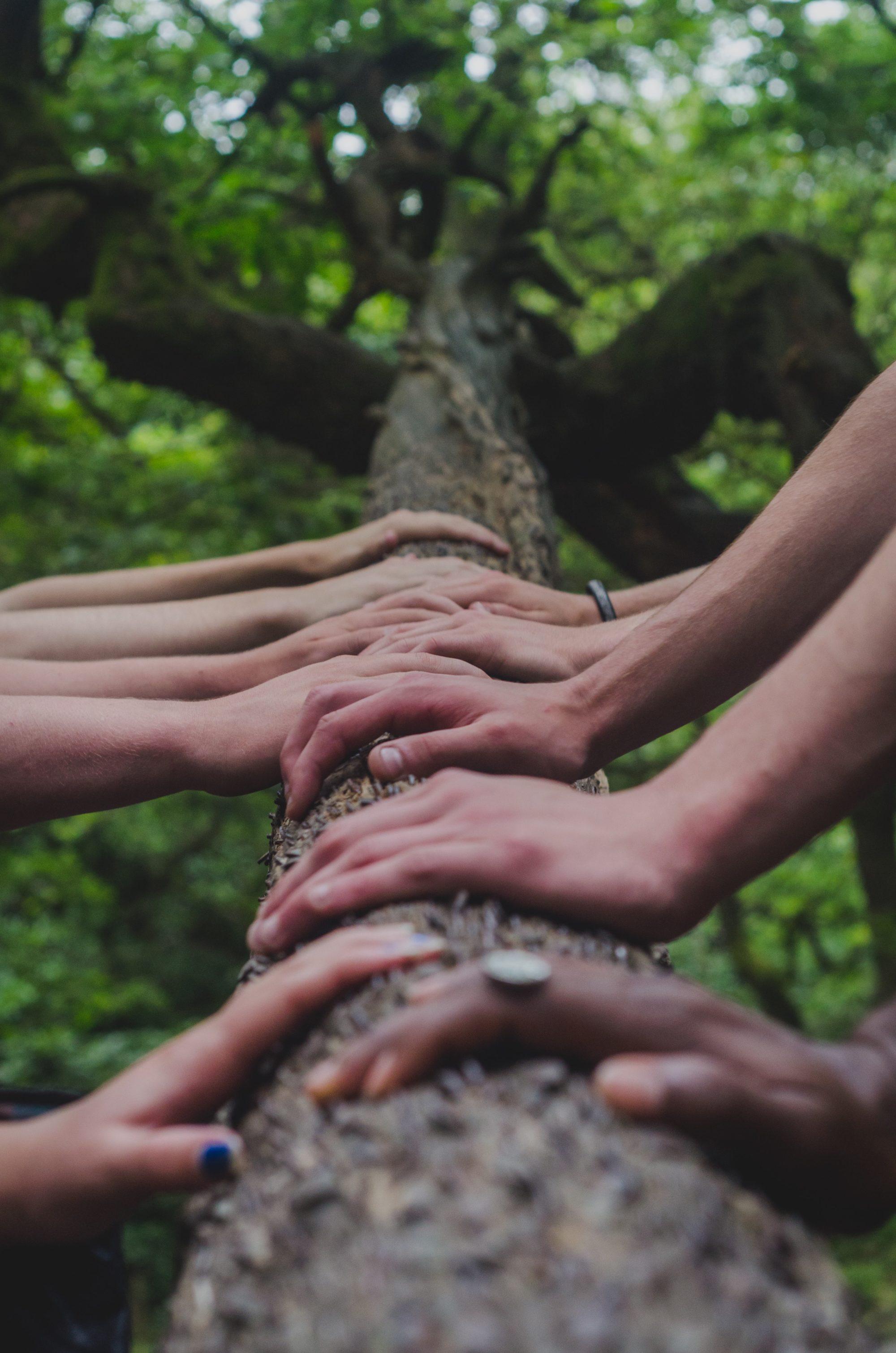 hands tree together ICEERS