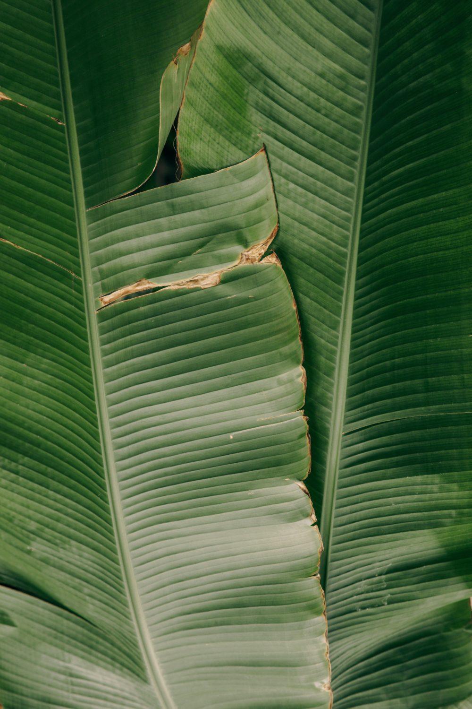 Photo by Maksim Goncharenok from Pexels conocimiento de las plantas