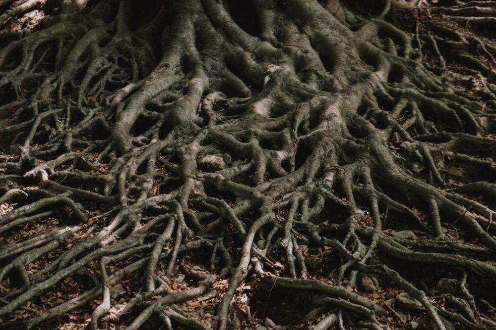 raíces ayahuasca animismo