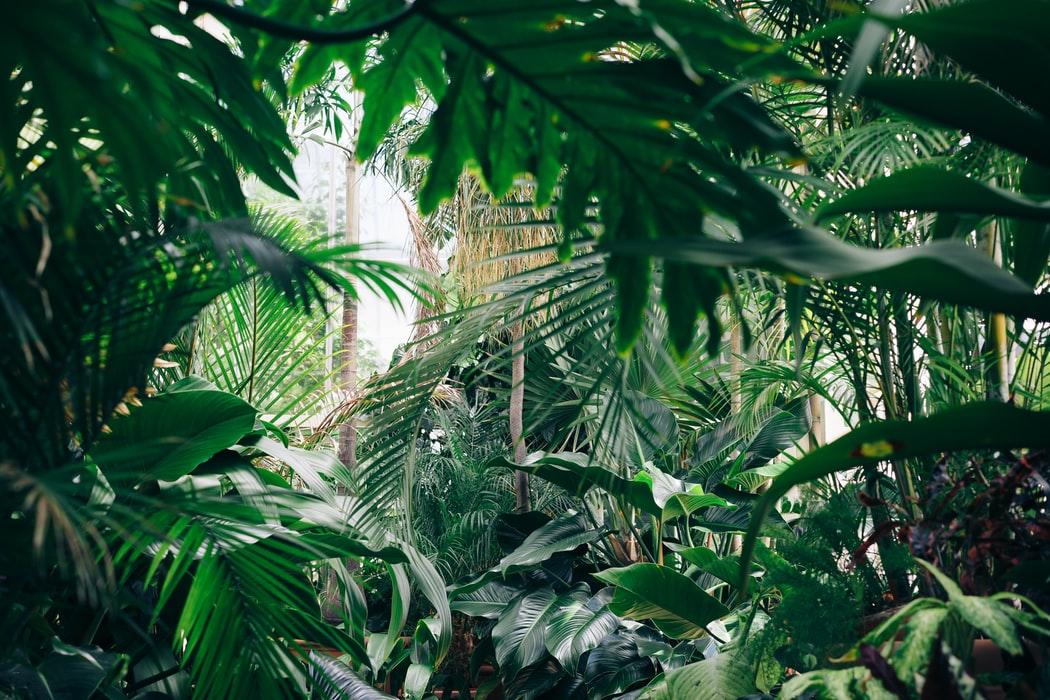 ayahuasca public health study jungle ICEERS salud pública