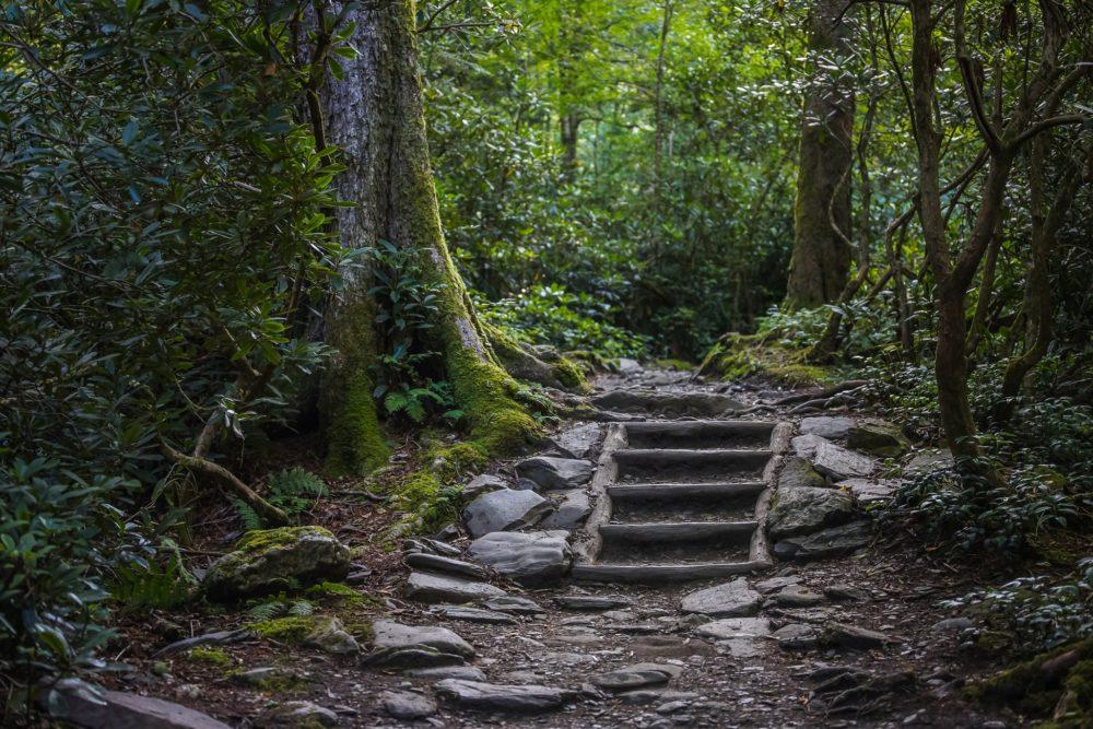 guía iniciación curación ayahuasca