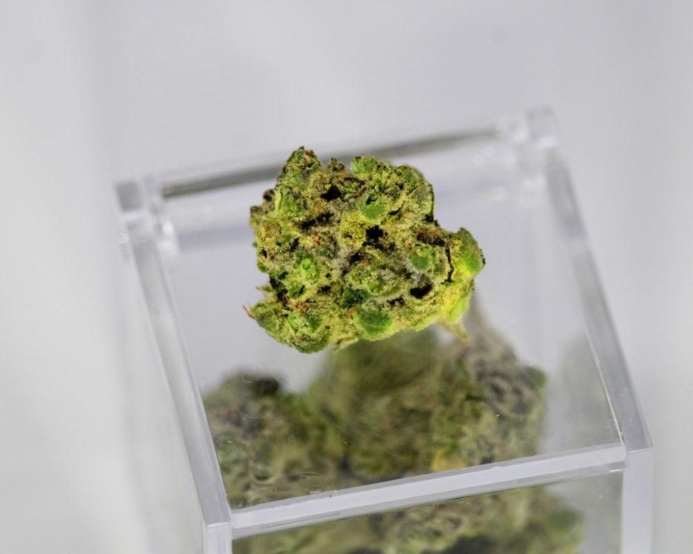 marihuana cannabis medicina medicinal medical medicine mariguana ICEERS