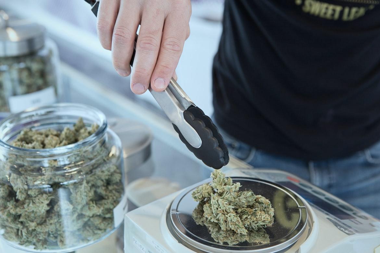 study research cannabis social clubs CSC CSCs estudio research