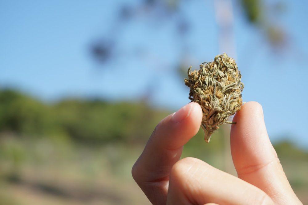 efectos sociosanitarios consumo cannabis España